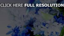 blumen blumenstrauß weiß blau blütenblätter