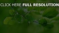 blätter zweig tropfen frühling grün
