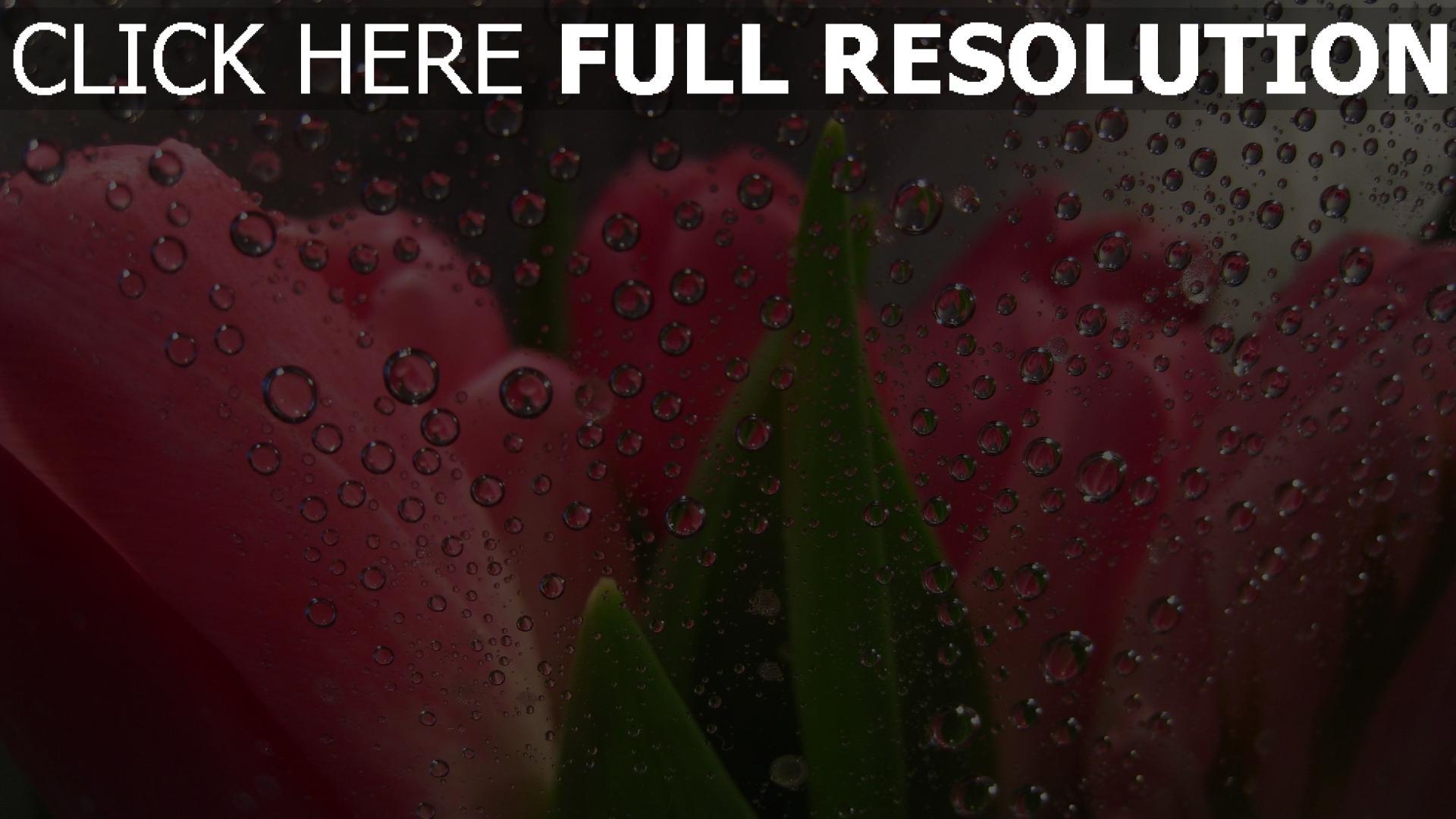 розы  фото обои картинки на рабочий стол