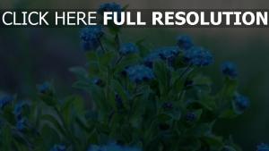 blumen blätter blüten blau frühling