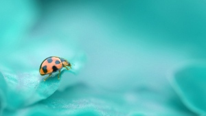 marienkäfer blatt pflanzen insekten