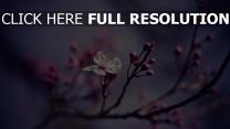 blumen blütenblätter frühling blüte geäst