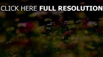 blumen feld blüte frühling gras