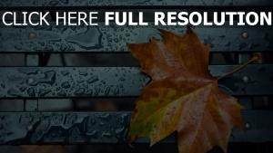 blatt tropfen regen wasser herbst
