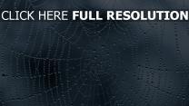 netzwerk spinnennetz tropfen nass grau
