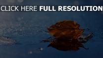 blatt trocken gefallen herbst wasser