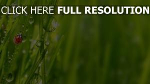 gras grün gras tropfen marienkäfer