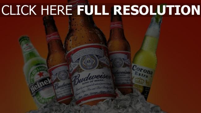 hd hintergrundbilder heineken budweiser corona bier getränke eis