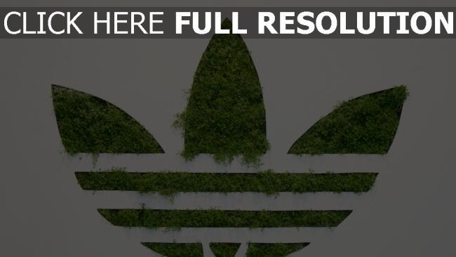 hd hintergrundbilder adidas gras logo hintergrund weißer