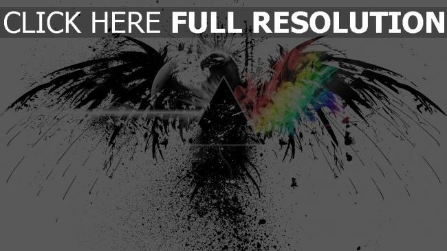 hd hintergrundbilder vogel pink floyd spray grafiken farben