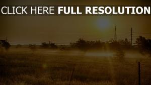 sonne gras sommer licht wärme