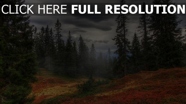 hd hintergrundbilder herbst tanne wald dunst nebel wolken grau