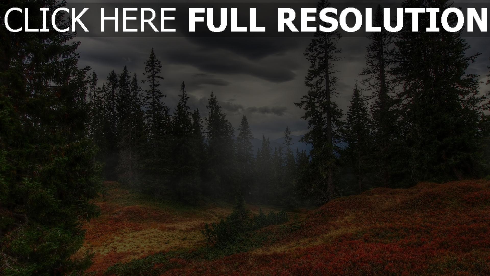 hd hintergrundbilder herbst tanne wald dunst nebel wolken grau 1920x1080