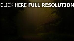 wald nebel haus trübung licht