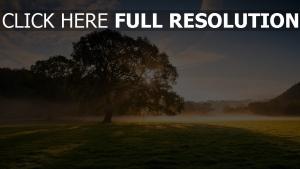 feld bäume dunst sonne licht