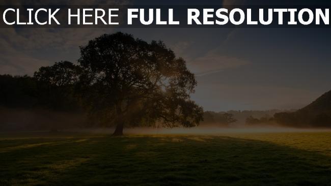 hd hintergrundbilder feld bäume dunst sonne licht