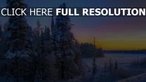 winter schnee wald tanne himmel sonnenuntergang hell