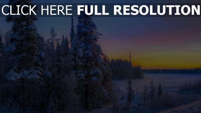 hd hintergrundbilder winter schnee wald tanne himmel sonnenuntergang hell