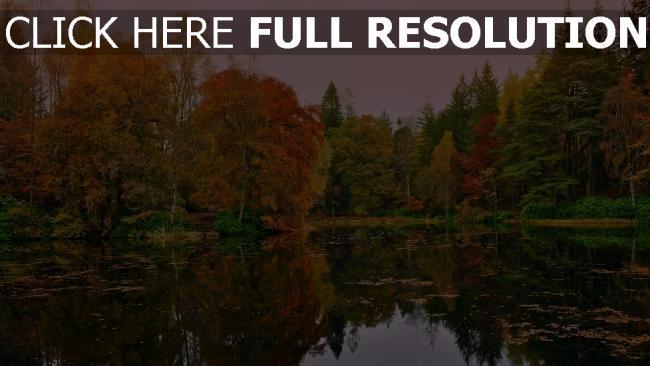 hd hintergrundbilder herbst wald bäume see blätter gelb