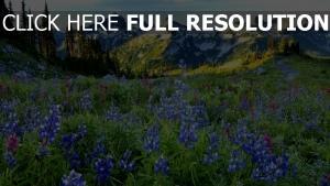 frühling gebirge alpen wiese gras blumen