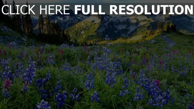 HD Hintergrundbilder frühling gebirge alpen wiese gras ...