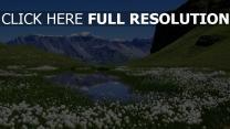 wiese wasser teich blumen berge sommer