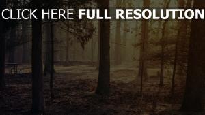 wald bäume morgen licht blätter trocken