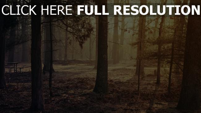 hd hintergrundbilder wald bäume morgen licht blätter trocken