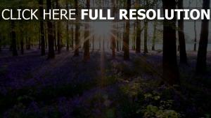 natur blumen frühling gras bäume