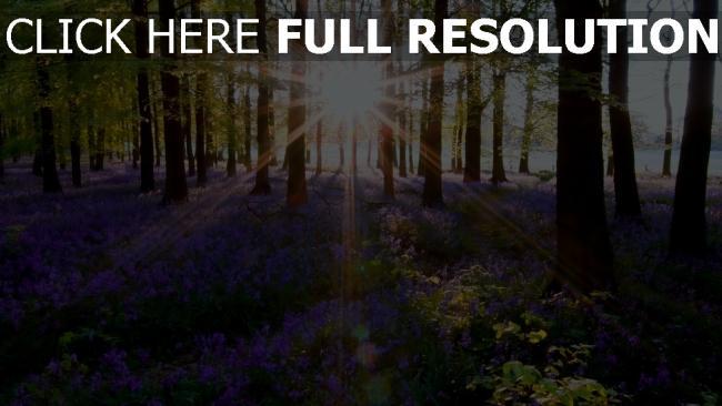 hd hintergrundbilder natur blumen frühling gras bäume