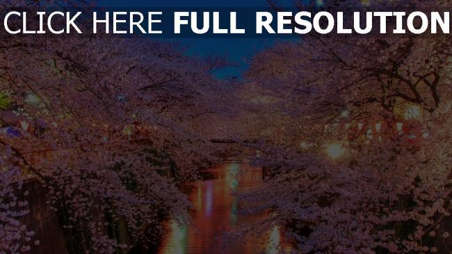 hd hintergrundbilder frühling blühen kirsche licht abend