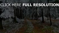 wald bäume kiefer straße schnee frost winter