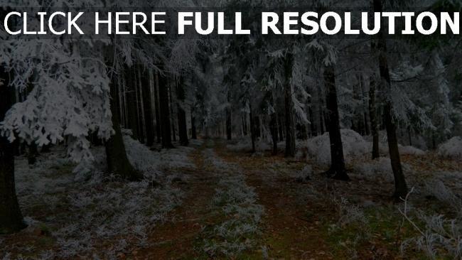 hd hintergrundbilder wald bäume kiefer straße schnee frost winter