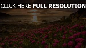 sonnenuntergang meer strand blumen rosa