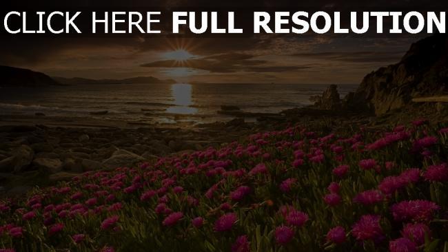 hd hintergrundbilder sonnenuntergang meer strand blumen rosa