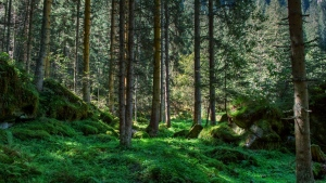 wald gras bäume steine kiefern