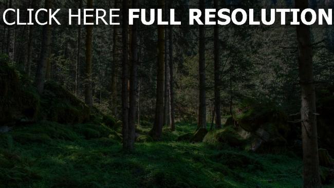 hd hintergrundbilder wald gras bäume steine kiefern