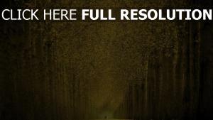 fußweg wald bäume laub herbst