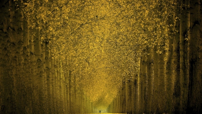hd hintergrundbilder fußweg wald bäume laub herbst