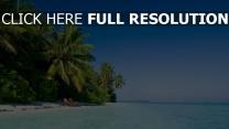 meer wasser blau palme bäume strand