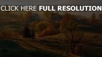 herbst häuser bäume nebel dämmerung
