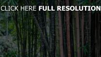 bambus bäume blätter beschriftung