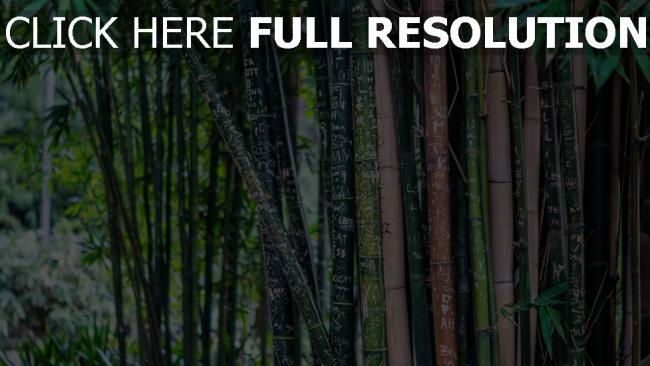 hd hintergrundbilder bambus bäume blätter beschriftung