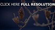 zweig blätter frost bokeh