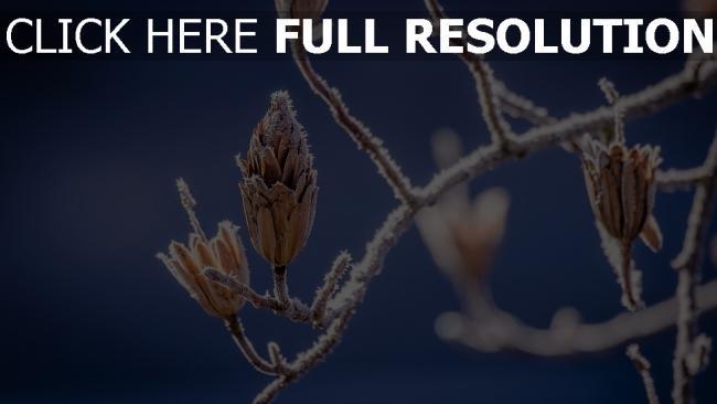 hd hintergrundbilder zweig blätter frost bokeh