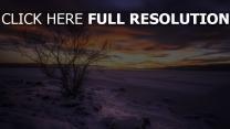 winter see schnee strauch himmel sonnenuntergang norwegen