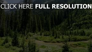 fichtenwald bäume berge hügel wyoming usa