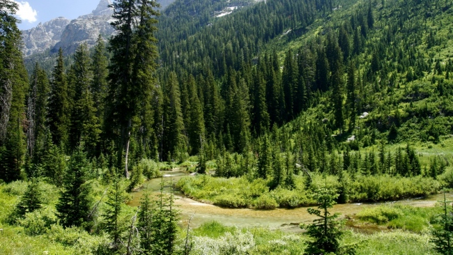 hd hintergrundbilder fichtenwald bäume berge hügel wyoming usa