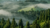 bergfichtenwald nebel hochalpen österreich
