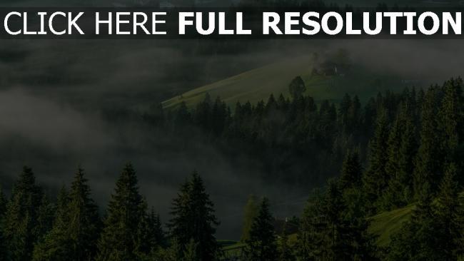 hd hintergrundbilder bergfichtenwald nebel hochalpen österreich